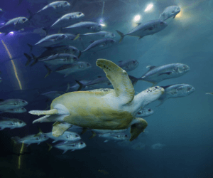 Plymouth National Marine Aquarium