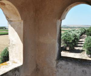 Masseria Tentua del Barco Wine Tour